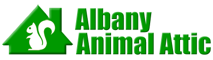 Albany Animal Attic